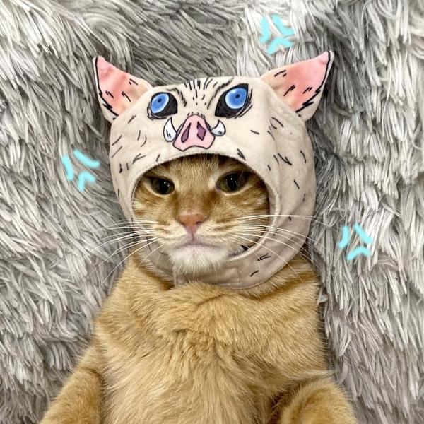 鬼滅之刃嘴平伊之助寵物用品小貓咪毛絨頭套帽子裝扮頭 花樣年華