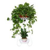 花架 歐式花架鐵藝多層綠蘿吊蘭客廳室內陽台花架子盆栽地面落地式 莎瓦迪卡