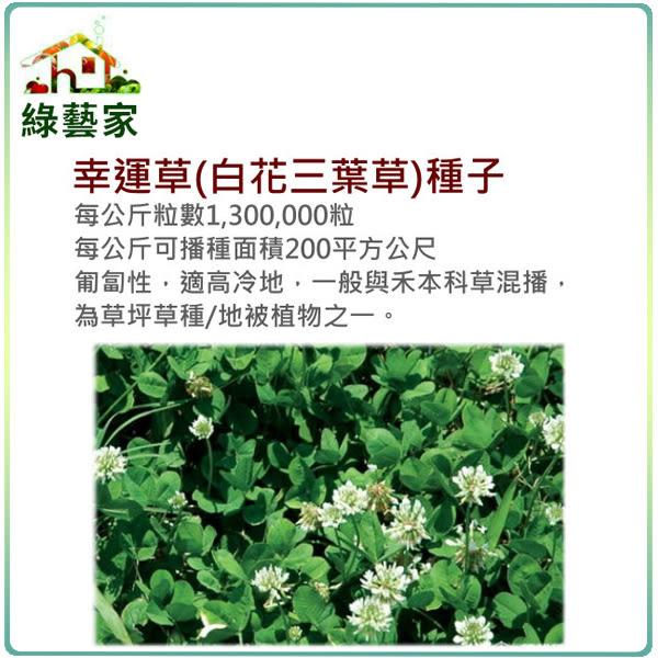 【綠藝家】M09.幸運草(白花三葉草)種子7500顆