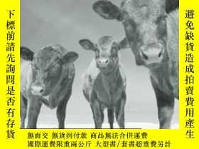 二手書博民逛書店Animal罕見Capital-動物資本Y436638 Nicole Shukin Univ Of Minne