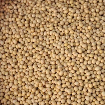 生產追溯冰大豆(國產非基改黃豆)500g