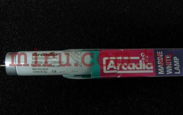 【西高地水族坊】英國阿卡迪亞Arcadia 海水長效鹵素燈管MARINE WHITE LAMP T8 FL (36w)