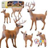 小鹿梅花鹿動物仿真模型玩具套裝實心塑料野生生物模型場景禮盒裝