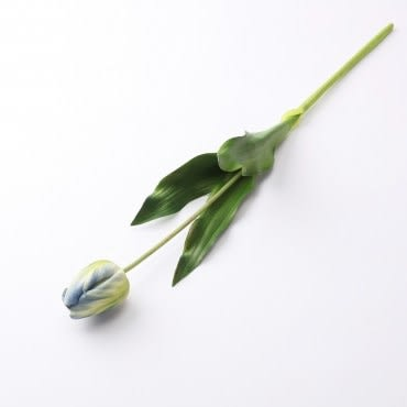 悅迎郁金香 藍綠