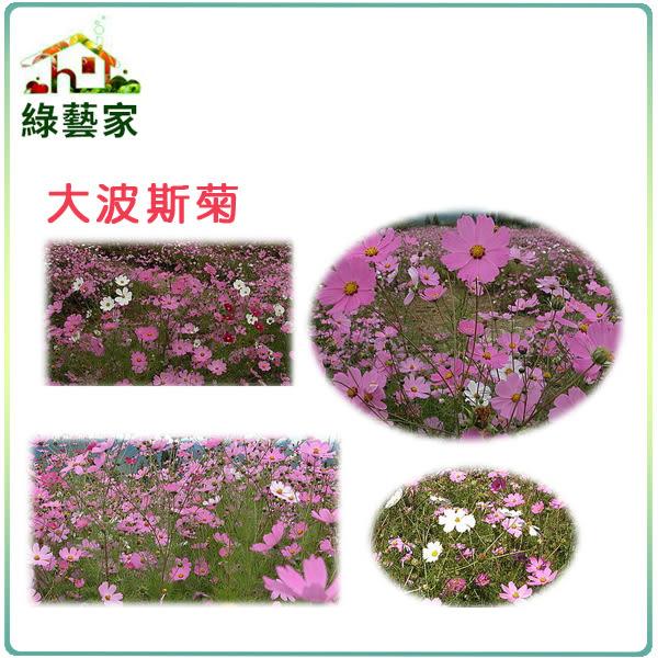 【綠藝家】H08.墨西哥大波斯菊(顏色綜合)種子600顆