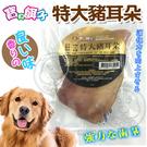 【培菓平價寵物網 】寶貝餌子》795B特大豬耳朵-1入包