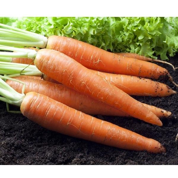 【南紡購物中心】鮮採家 鮮採紅蘿蔔5台斤1箱