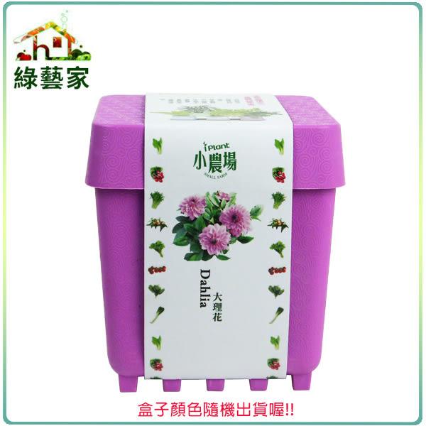 【綠藝家004-D18】iPlant小農場系列-大理花