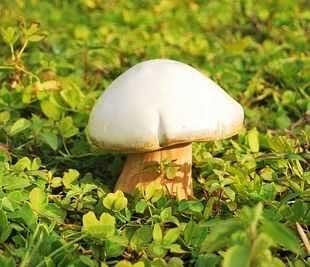 超逼真陶瓷蘑菇 花園 園藝 別墅 新家 裝飾用品 白色款式