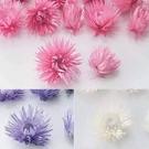 日本進口永生花花材,大地農園岩石珊瑚小銀菊32010,無梗單花頭,一份一大一小