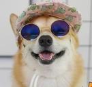 狗狗柯基擺拍眼鏡