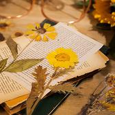 【BlueCat】週末花店系列乾燥花透明貼紙
