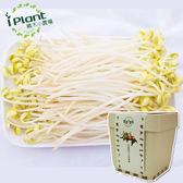 iPlant積木農場-豆芽菜