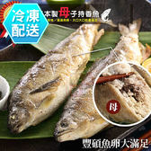 爆卵子持母香魚 海鮮烤肉 [CO00356] 千御國際