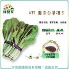 【綠藝家】A35.鳳京白菜種子750顆...