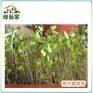 【綠藝家】大包裝青花菜芽種子150克(青花椰菜芽種子)