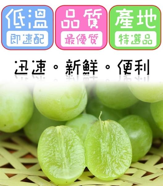 果之家 日本空運無籽麝香青葡萄禮盒1房x2盒(約700g±5%/房)