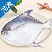 【肥美細膩】嚴選新鮮白鯧300~400g/尾【愛買冷凍】