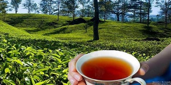 錫蘭紅茶Dilmah 斯里蘭卡第一品牌 帝瑪100%錫蘭小紅茶包 2g*100入/盒(買12盒送1盒)