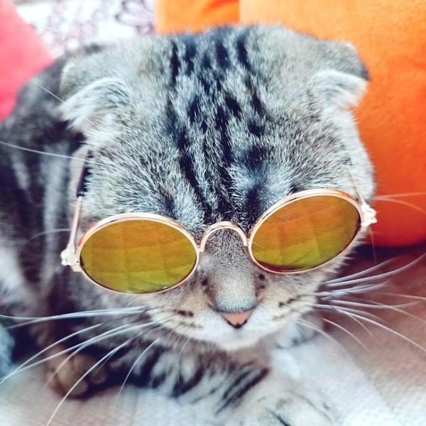 寵物貓眼鏡貓咪墨鏡酷貓搞怪