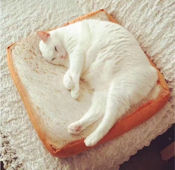 35x37公分 吐司坐墊 仿真 土司 抱枕 寵物 貓咪 狗 椅墊 聖誕節 午睡枕 枕頭【RS603】