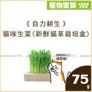 加購-貓咪生菜(新鮮貓草栽培盒)75G