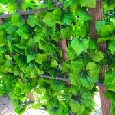仿真植物 仿真葡萄葉假花藤條藤蔓植物塑料綠蘿葉子綠葉水管道纏繞吊頂裝飾星河光年DF