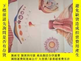 二手書博民逛書店罕見衛生教學掛圖:女性生殖系統--朝花美術出版社1開張Y1513