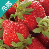 日本福岡草莓禮盒2盤(16-20顆/盤)/箱(500G+-10%/盤)【愛買冷藏】