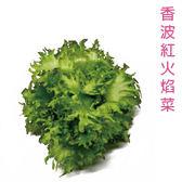 預購 【安心蔬食】水耕蔬菜-香波紅火焰菜(150g)