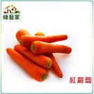 【綠藝家】C01.紅蘿蔔(胡蘿蔔)種子5...