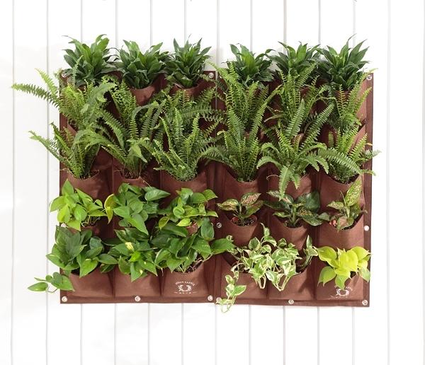 URBAN FARMER 城市小農 植栽淨化綠牆-組合C