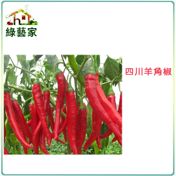 【綠藝家】大包裝G37.四川羊角椒種子(一般辣)1200顆