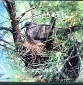 (二手書)【鳳凰谷的野鳥】