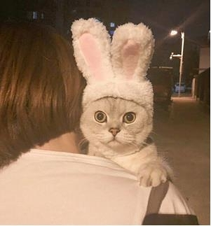可愛兔子頭套貓頭套變身裝貓咪頭飾狗狗頭套寵物帽子泰迪兔子耳朵 陽光好物