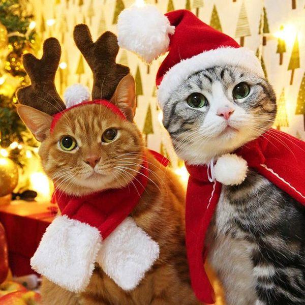 抖音同款狗狗貓咪帽子貓頭飾小貓頭套可愛裝扮寵聖誕帽生日帽子【全館免運】