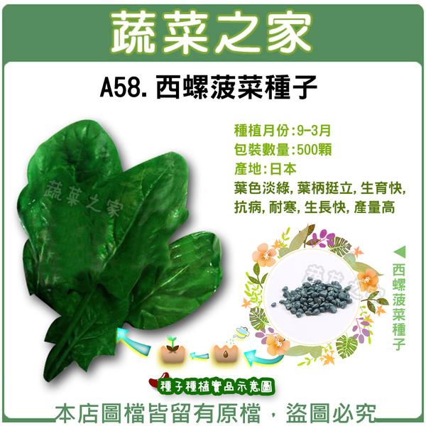 【綠藝家】A58西螺菠菜種子500顆