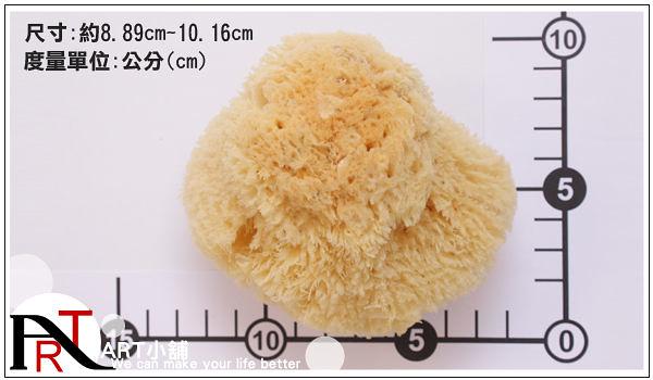 "『ART小舖』希臘Artist's CO354 Coarse Natural Sponge 粗質繪畫清潔專用天然海綿 3.5-4""英吋 NO.23501"