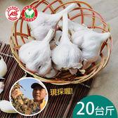 雲林有機新鮮大蒜(乾蒜)20台斤含運組