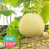 太保艸耕美濃瓜(粒粒特優)10斤免運組
