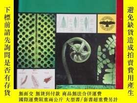 二手書博民逛書店A罕見Field Guide to Ferns and thei