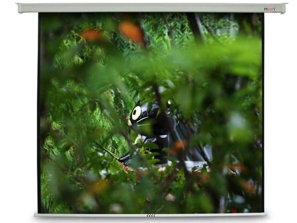 《名展影音》福利品 PENNY PP-120(16:9) 120 吋 方型電動布幕 適用家庭劇院欣賞