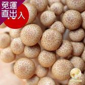 Global Fresh 日本長野鴻喜菇10入 200g/包【免運直出】