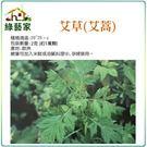 【綠藝家】大包裝K05.艾草(艾蒿)種子...