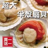 【買一送一】☆超大扇貝☆半殼扇貝 新鮮生凍 烤/火鍋/焗烤