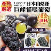 【果之蔬-全省免運費】日本山梨縣溫室無籽巨峰貓眼葡萄X1串(400g±10%/串)