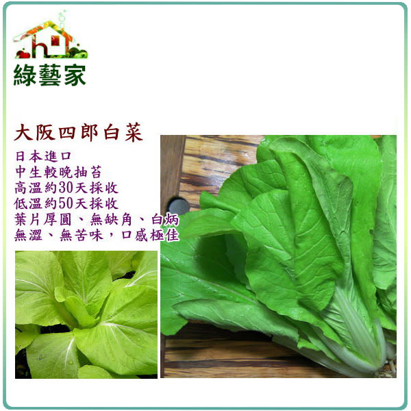 【綠藝家】大包裝A49.大阪四郎白菜種子70克