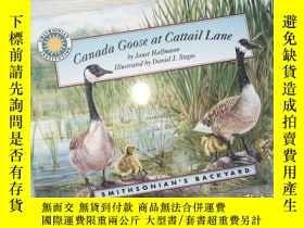 二手書博民逛書店Canada罕見Goose at Cattail LaneY198833
