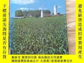 二手書博民逛書店Modern罕見Corn ProductionY11418 Sa