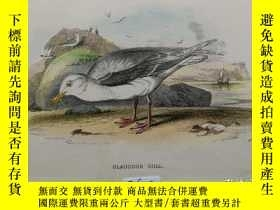 二手書博民逛書店【百罕見】《鳥類·北極鷗》(GLAUCOUS GULL)彩色石版畫 1890年 帶卡紙裝裱 (PM0078
